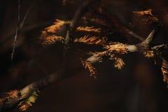 Gelbblätter, die mit Morgensonnenschein bedeckt werden Lizenzfreie Stockfotografie