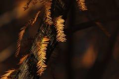 Gelbblätter, die mit Morgensonnenschein bedeckt werden Lizenzfreie Stockbilder
