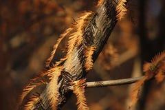 Gelbblätter, die mit Morgensonnenschein bedeckt werden Stockfotos