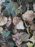 Gelbblätter im Herbstwald Lizenzfreie Stockfotos