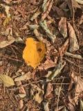 Gelbblätter im Herbstwald Lizenzfreies Stockfoto