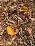 Gelbblätter im Herbstwald Stockfotos