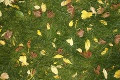 Gelbblätter und grünes Gras Stockbilder