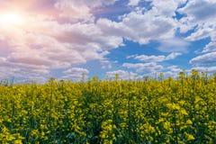 Gelbe Ölvergewaltigungssamen in der Blüte Feld des Rapssamens - Anlage für grüne Energie Lizenzfreie Stockfotos