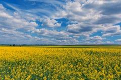 Gelbe Ölvergewaltigungssamen in der Blüte Feld des Rapssamens - Anlage für grüne Energie Stockbilder