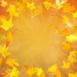 Gelbe Ahornblätter des Herbstes Lizenzfreies Stockfoto