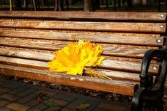 Gelbe Ahornblätter, Herbstpark, goldene Herbstzeit, das Gelb Lizenzfreie Stockfotografie
