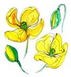 Gelbe Aquarellmohnblume Stockbilder