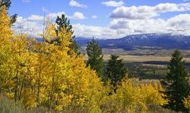 Gelbe Aspen-Bäume über Tal Lizenzfreie Stockfotos