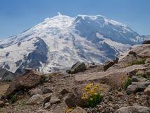 Gelbe Aster blüht auf Felsen mit Gletscheransicht Stockfotografie