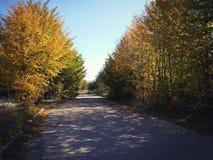 Gelbe Bäume des Herbstes über der Straße Stockbild