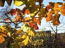 Gelbe Bäume des Herbstes Stockbilder