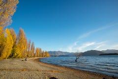 Gelbe Bäume des Herbstes um Wanaka See Stockfoto