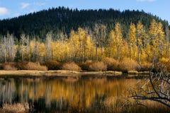 Gelbe Bäume durch das Wasser Lizenzfreie Stockbilder