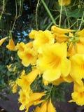 Gelbe Baumblumen stockbild