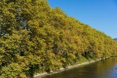 Gelbe Baumgrenze mit Fluss und Brücke im Herbst Stockfotografie