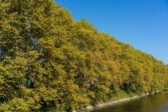 Gelbe Baumgrenze mit Fluss und Brücke im Herbst Stockfoto