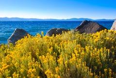 Gelbe Beifußblumen durch das Lake Tahoe lizenzfreie stockfotos