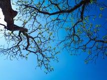 Gelbe Blätter auf einem blauen Hintergrund lizenzfreies stockbild