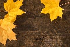 Gelbe Blätter des Ahorns auf einem Baumstumpf lizenzfreies stockfoto