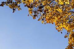Gelbe Blätter des Herbstes auf blauem Himmel stockfotos
