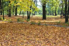 Gelbe Blätter, die von den Bäumen fallen Wundervolle Landschaft lizenzfreie stockfotos