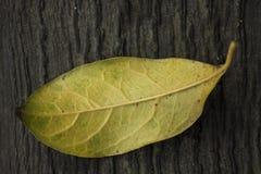 Gelbe Blätter mit Holz stockbilder