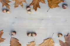 Gelbe Blätter und Eicheln des Herbstes auf einem Baumhintergrund 8 lizenzfreie stockfotos