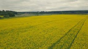 Gelbe blühende Blumen auf einem Sommergebiet Landschaftssommer-Feldblumen lizenzfreie stockfotografie