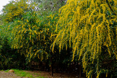 Gelbe Blüte Lizenzfreie Stockfotos