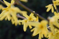 Gelbe Blüte Lizenzfreies Stockfoto
