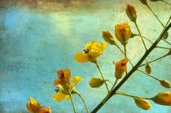 Gelbe Blüten Stockfoto