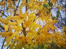 Gelbe Blüten stockbild