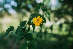 Gelbe Blütenanlage Stockfotografie