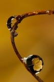 Gelbe Blattreflexion in den Tröpfchen Stockbild