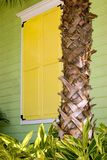 Gelbe Blendenverschlüsse mit Palmen-Kabel Stockbild