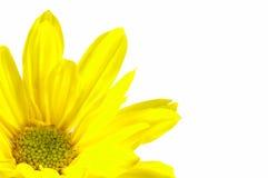 Gelbe Blume Lizenzfreies Stockbild