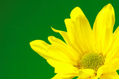 Gelbe Blume 2 stockbild