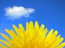 Gelbe Blume. Stockfotografie