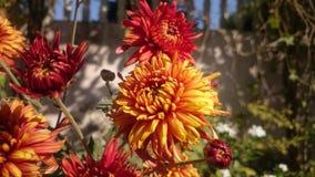 Gelbe Blume stockfotografie