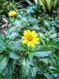 Gelbe Blume Abbildung der roten Lilie lizenzfreie stockbilder