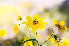 Gelbe Blume auf Arabien-Berg stockbild