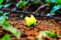 Gelbe Blume auf dem Boden Lizenzfreie Stockbilder