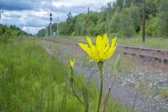 Gelbe Blume auf der Seite der Eisenbahn Lizenzfreies Stockfoto