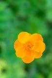 Gelbe Blume auf einem undeutlichen Hintergrund Stockfotografie