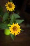 Gelbe Blume auf einer Tabelle Stockfotos