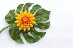 Gelbe Blume auf grünem Blatt Stockbild