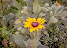 Gelbe Blume auf grünem Hintergrund lizenzfreies stockbild