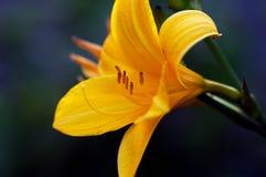 Gelbe Blume auf grünem Hintergrund Lizenzfreie Stockfotografie