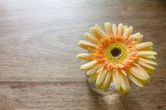 Gelbe Blume auf Holztischhintergrund Lizenzfreies Stockbild
